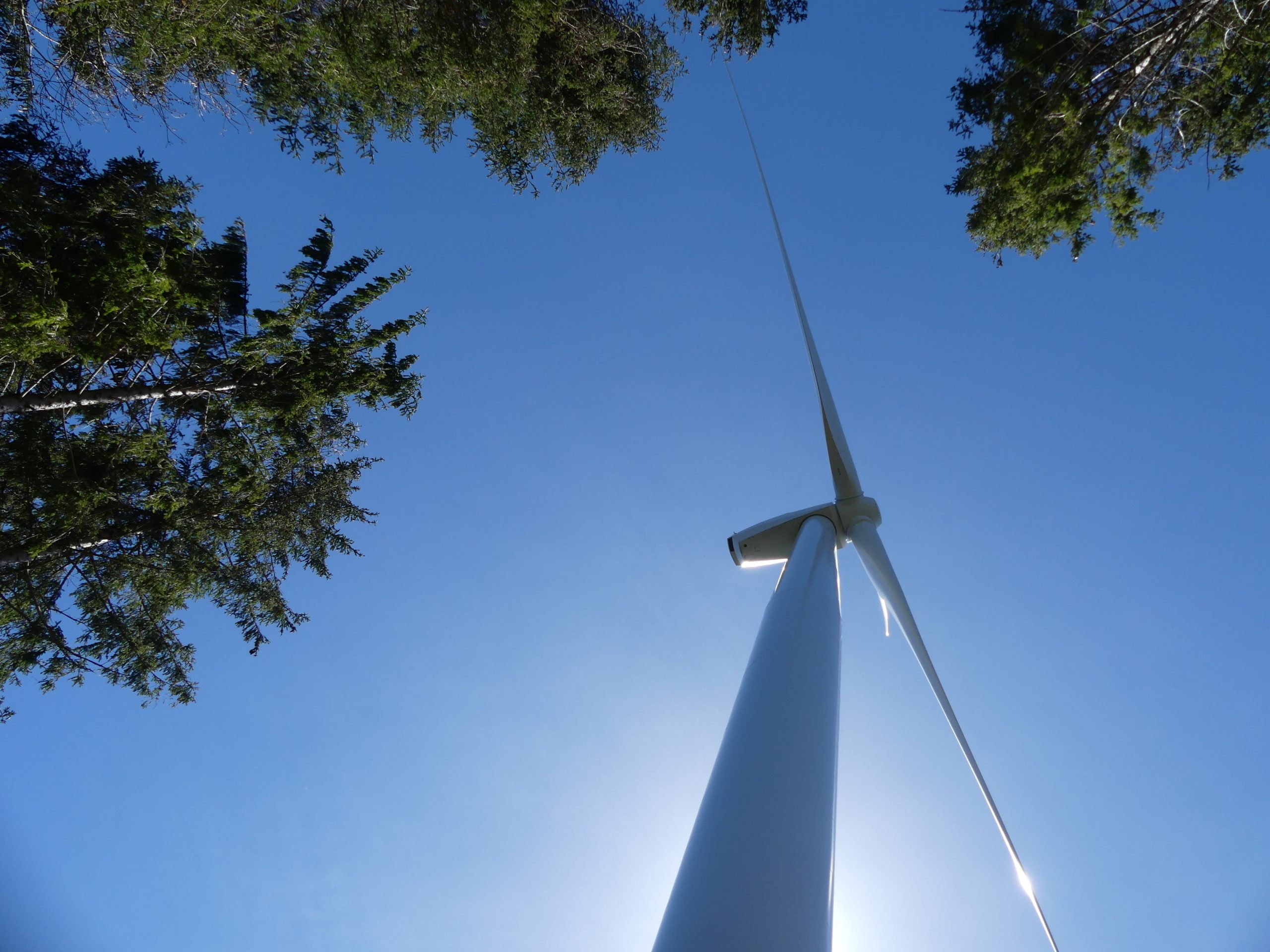 éoliennes en forêt