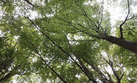 Forêt en Wallonie
