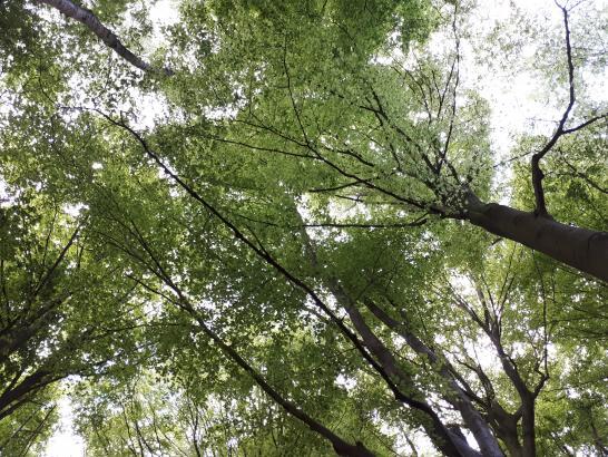 Forêt vue d'en bas
