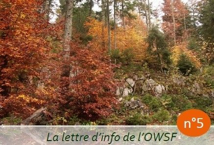 Observatoire wallon de la santé des forêts