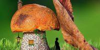 Huis paddenstoel